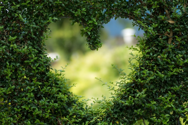 Heart in plant