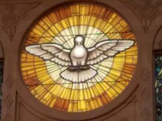 St Francis Dove